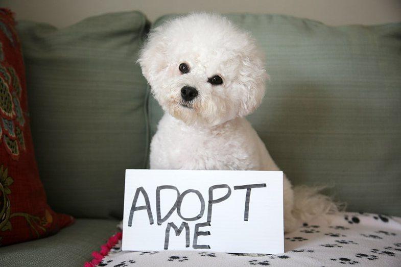 5 arsye të rëndësishme se pse duhet të adoptoni (dhe jo