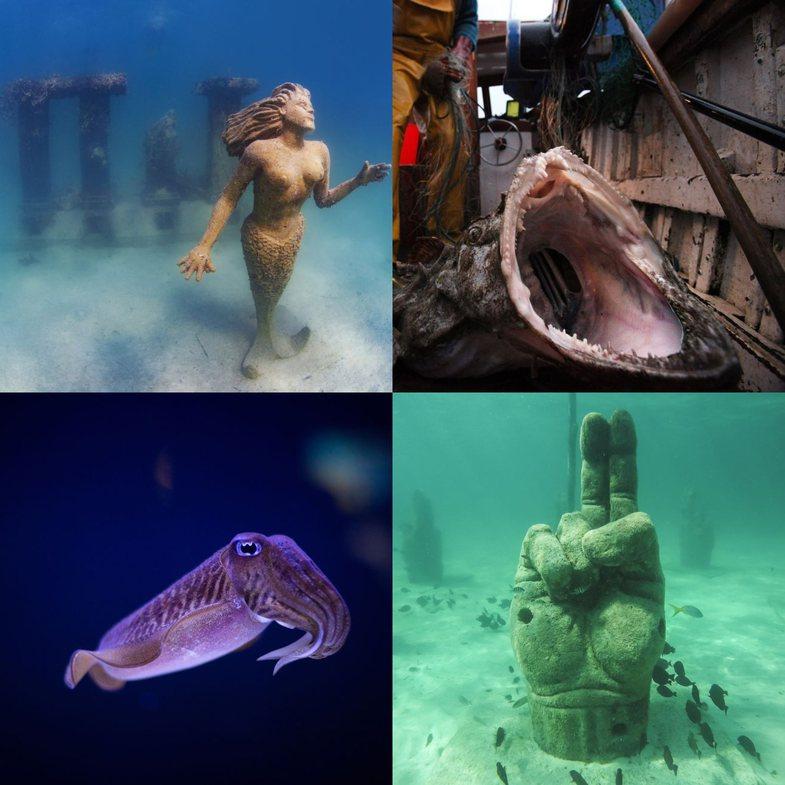 10+ gjëra të çuditshme që do të gjeni në oqeane!