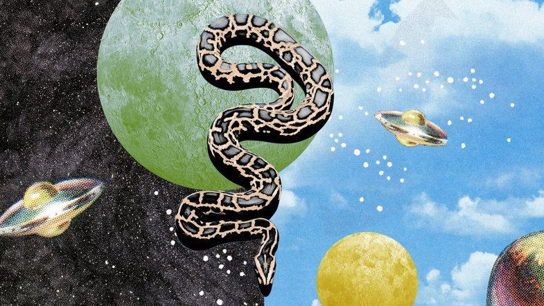 Ëndrra me gjarpërinj? 8 kuptime jo dhe aq ~negative~ sa